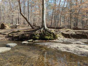 Tree near stream