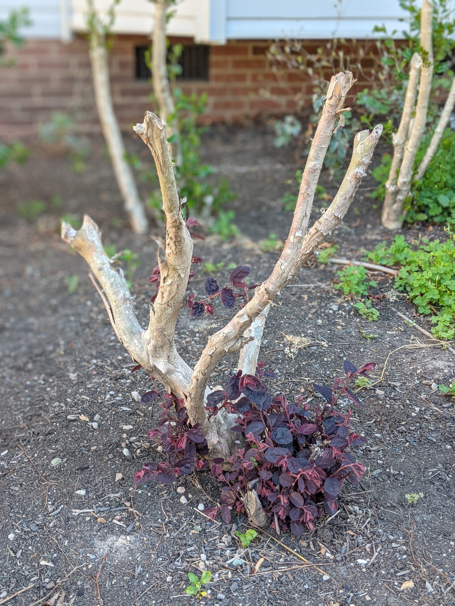 More pruning results